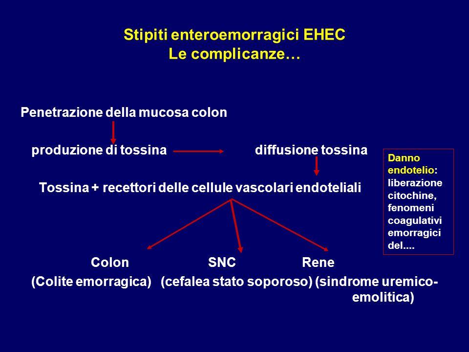Stipiti enteroemorragici EHEC Le complicanze…