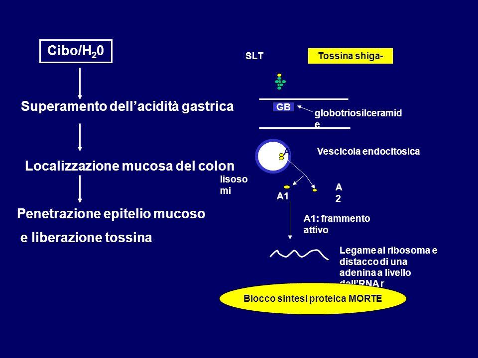Blocco sintesi proteica MORTE