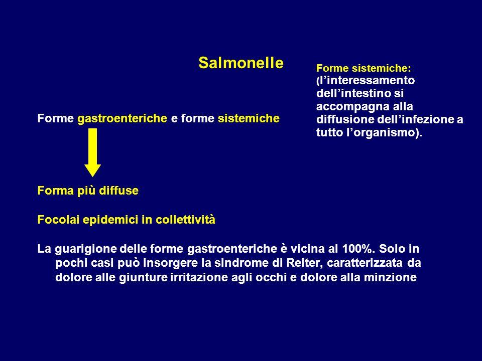 Salmonelle Forme gastroenteriche e forme sistemiche Forma più diffuse