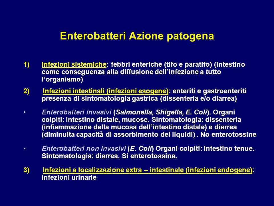 Enterobatteri Azione patogena
