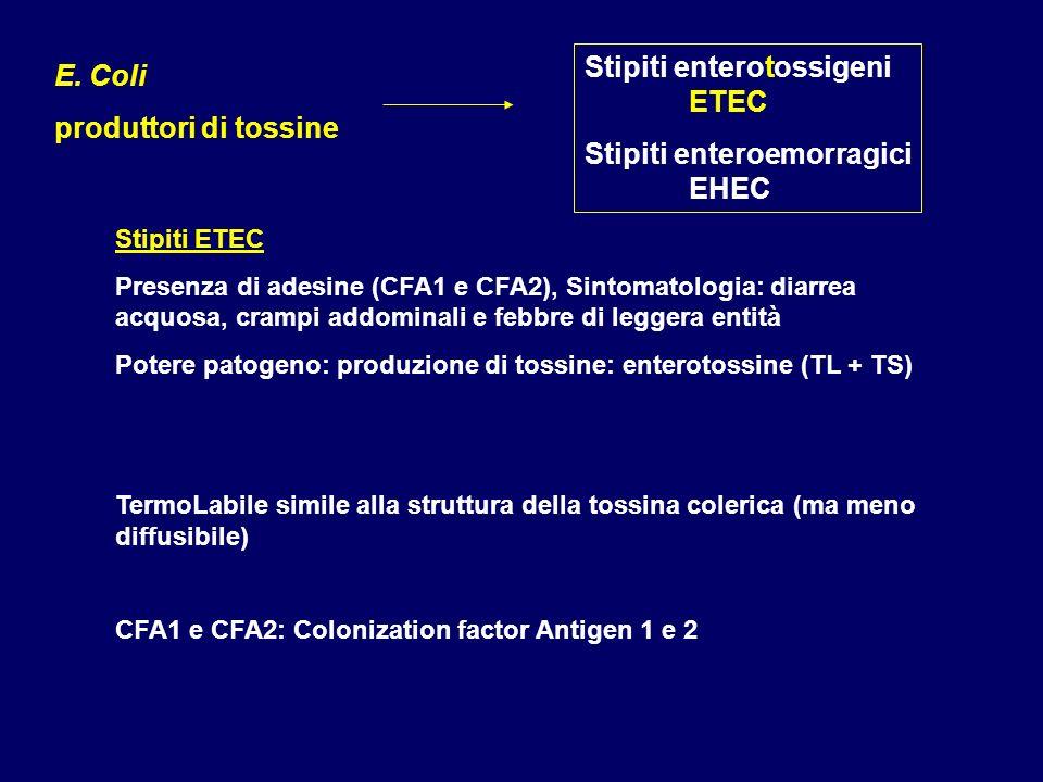 Stipiti enterotossigeni ETEC Stipiti enteroemorragici EHEC E. Coli