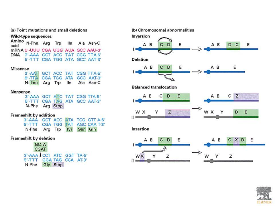 Diversi tipi di mutazione: (a) mutazioni puntiformi e piccole delezioni generalmente riguardano un solo gene (unità biologica semplice depositaria di un carattere ereditario e della sua trasmissione).