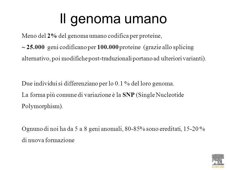 Il genoma umano Meno del 2% del genoma umano codifica per proteine,