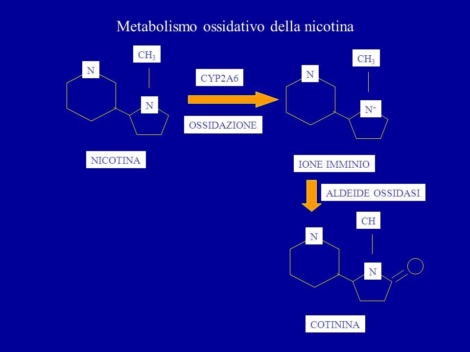 Metabolismo ossidativo della nicotina