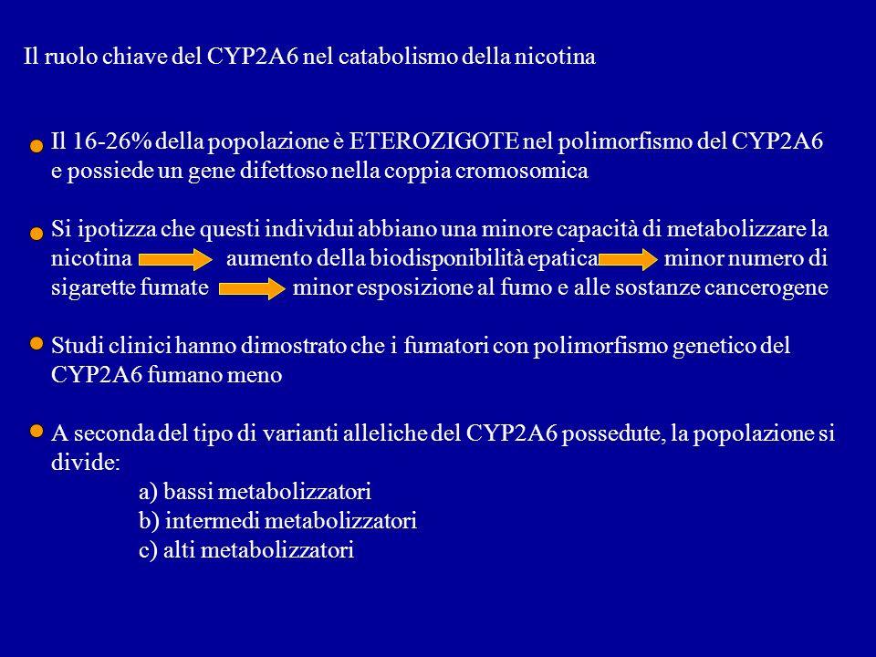 Il ruolo chiave del CYP2A6 nel catabolismo della nicotina