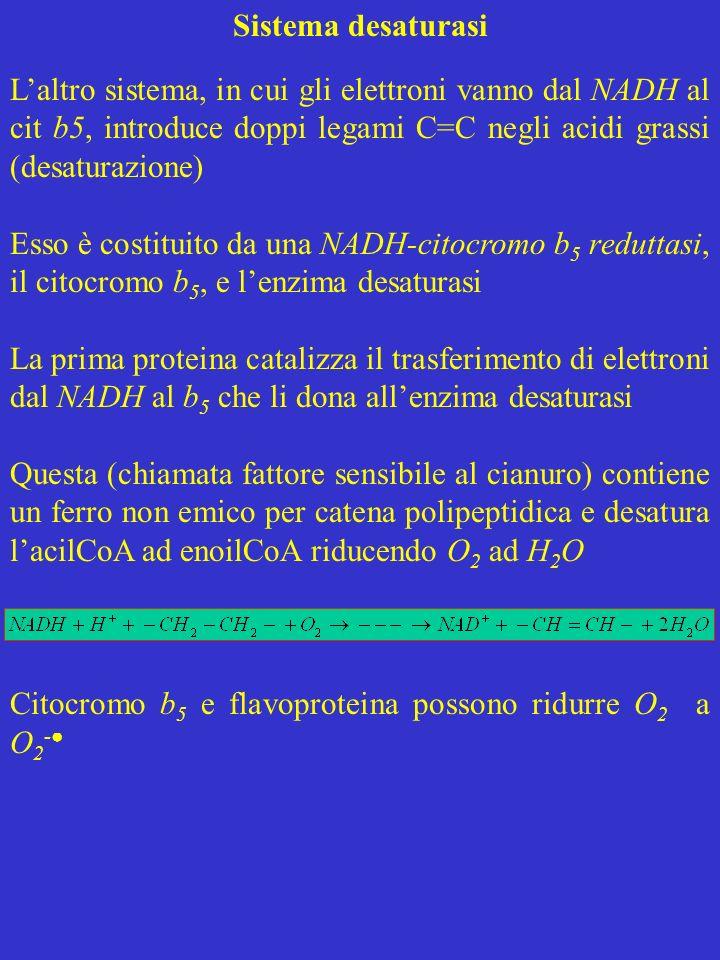 Sistema desaturasi L'altro sistema, in cui gli elettroni vanno dal NADH al cit b5, introduce doppi legami C=C negli acidi grassi (desaturazione)