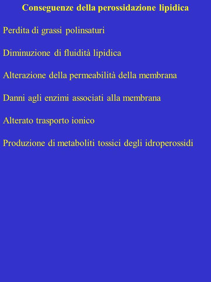 Conseguenze della perossidazione lipidica