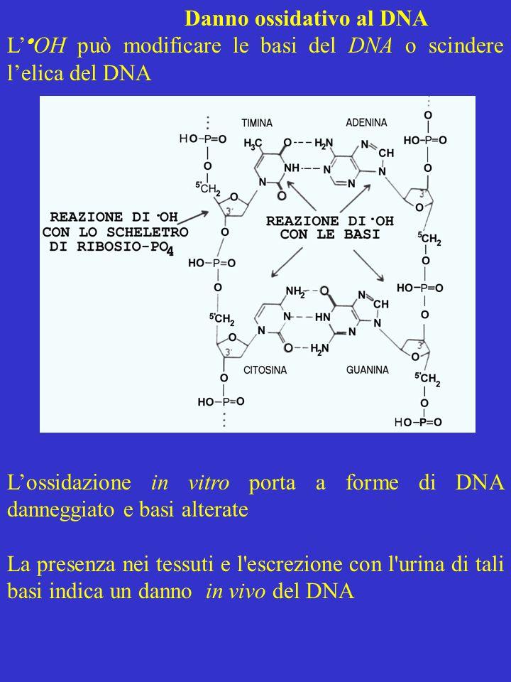 Danno ossidativo al DNA