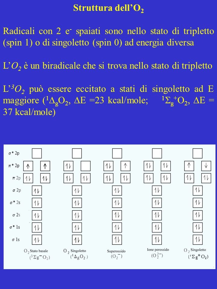 Struttura dell'O2Radicali con 2 e- spaiati sono nello stato di tripletto (spin 1) o di singoletto (spin 0) ad energia diversa.