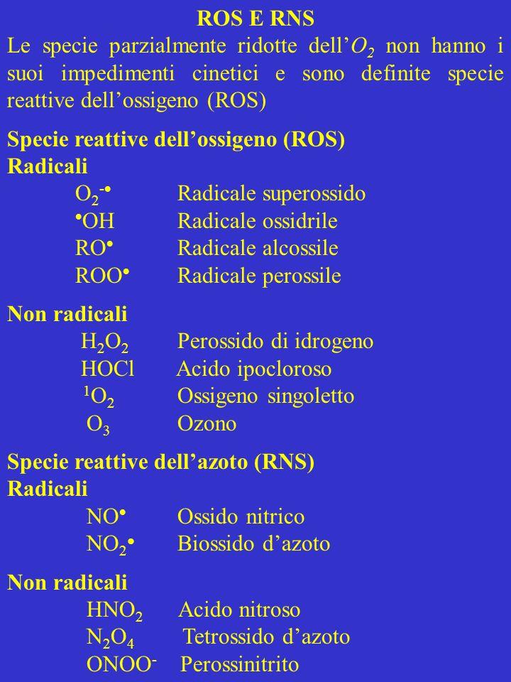 ROS E RNS Le specie parzialmente ridotte dell'O2 non hanno i suoi impedimenti cinetici e sono definite specie reattive dell'ossigeno (ROS)