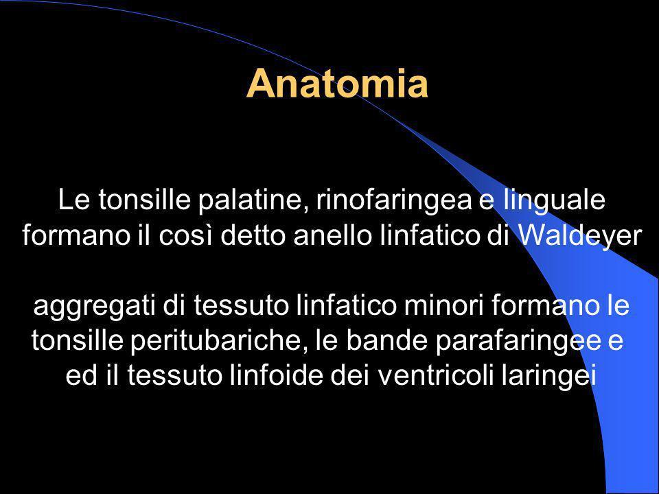 Anatomia Le tonsille palatine, rinofaringea e linguale