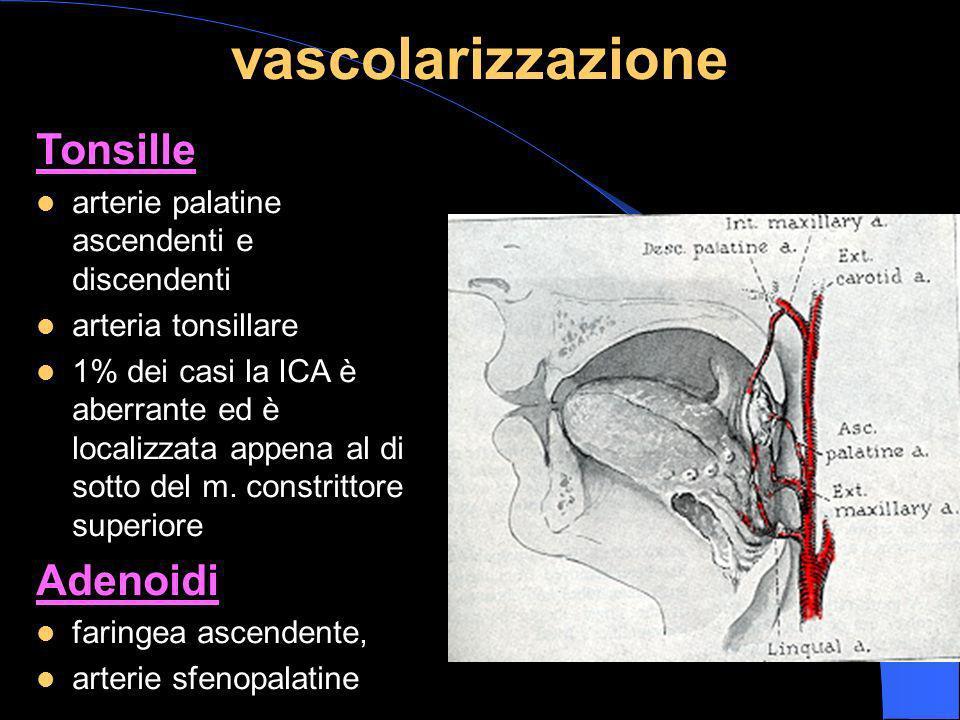 vascolarizzazione Tonsille Adenoidi
