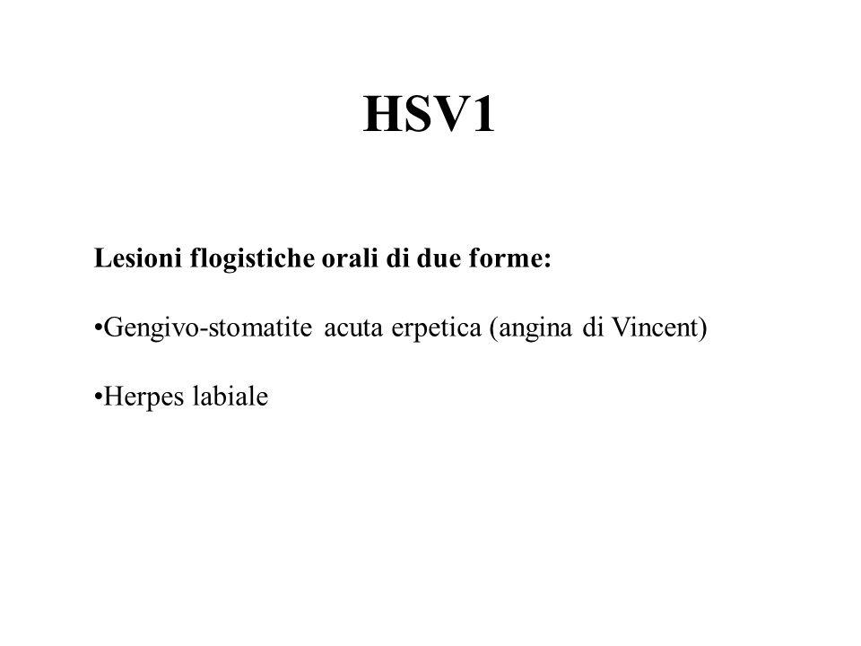 HSV1 Lesioni flogistiche orali di due forme: