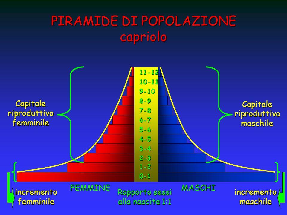 PIRAMIDE DI POPOLAZIONE capriolo