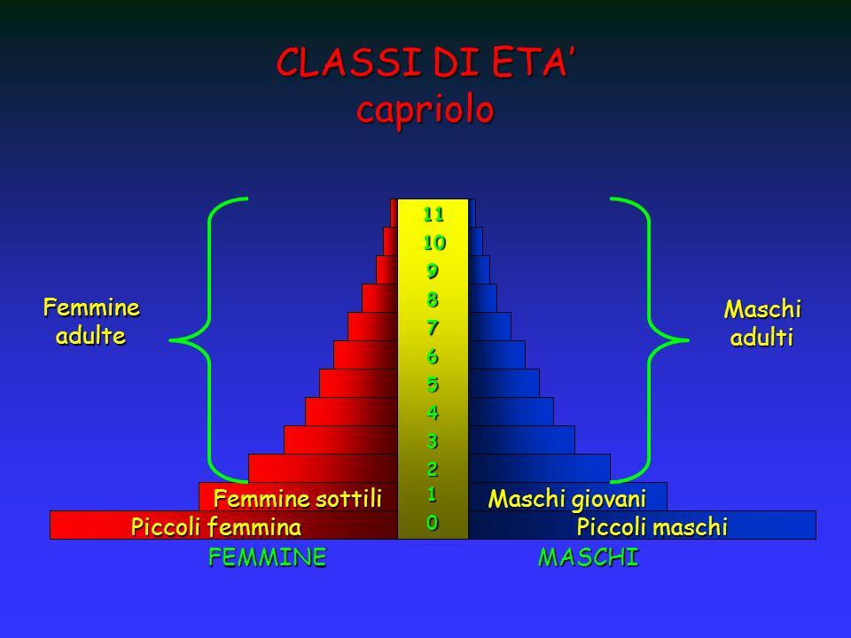 CLASSI DI ETA' capriolo