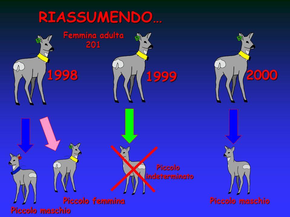 RIASSUMENDO… 1998 1999 2000 Femmina adulta 201 Piccolo femmina