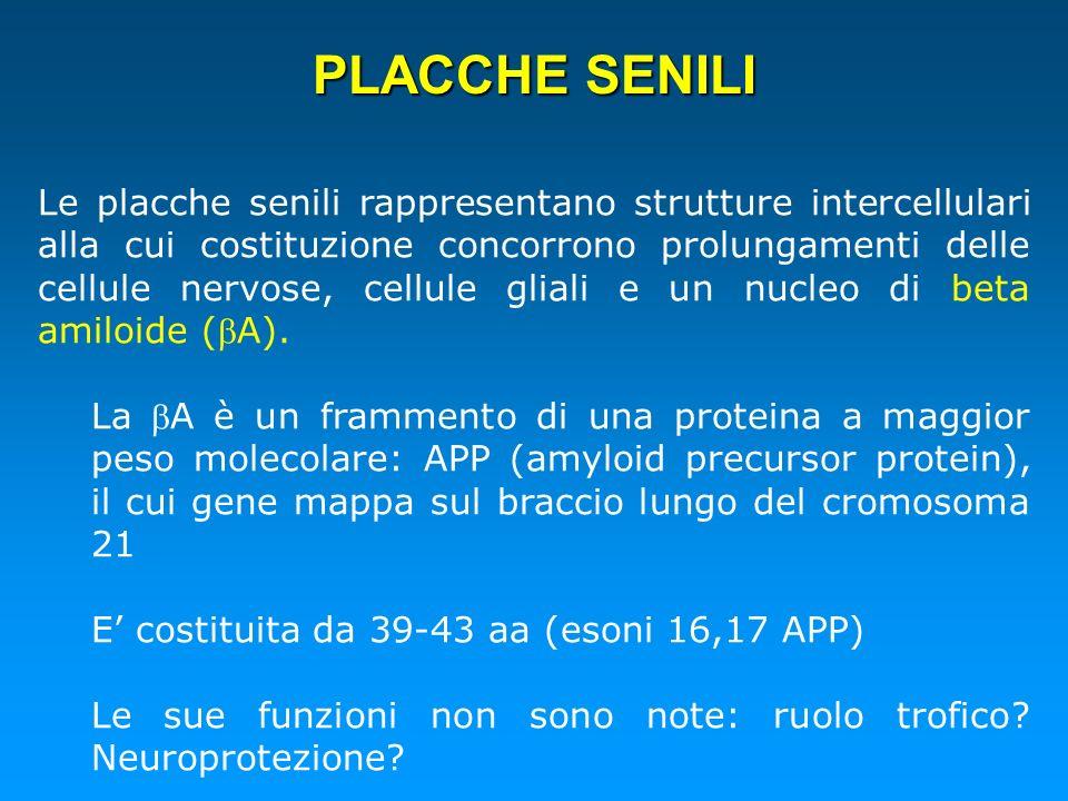 PLACCHE SENILI