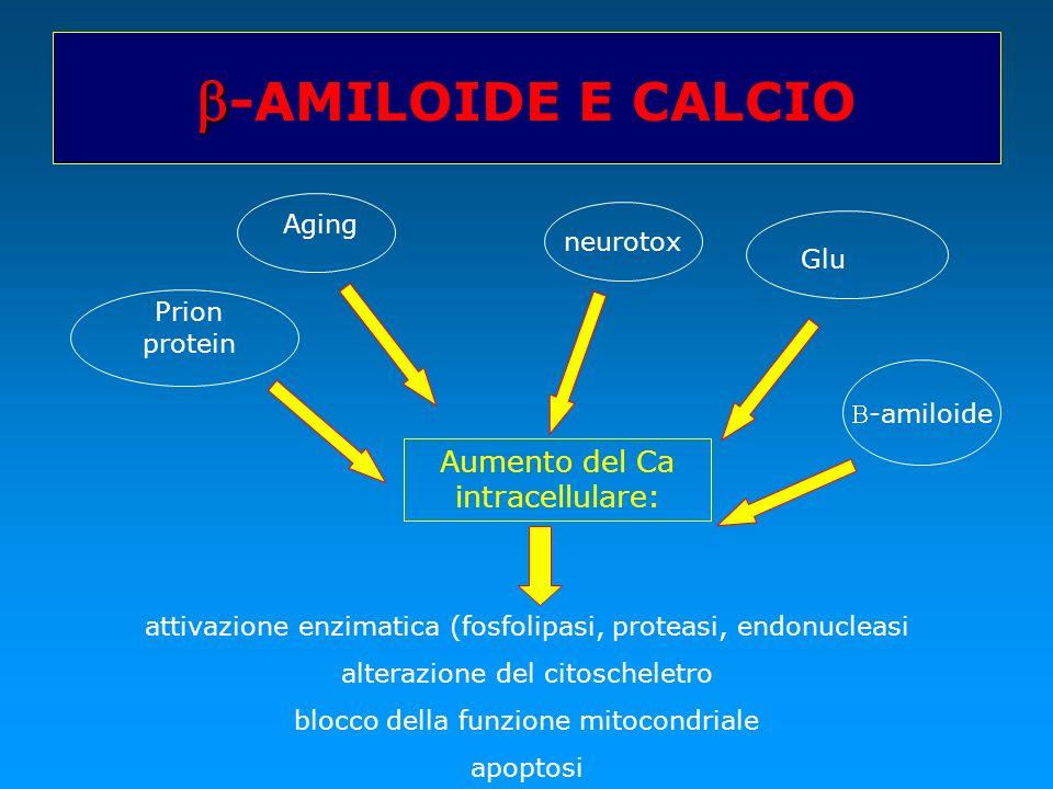 b-AMILOIDE E CALCIO Aumento del Ca intracellulare: Aging neurotox Glu