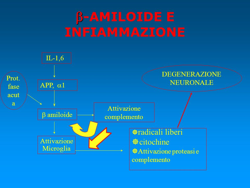 b-AMILOIDE E INFIAMMAZIONE