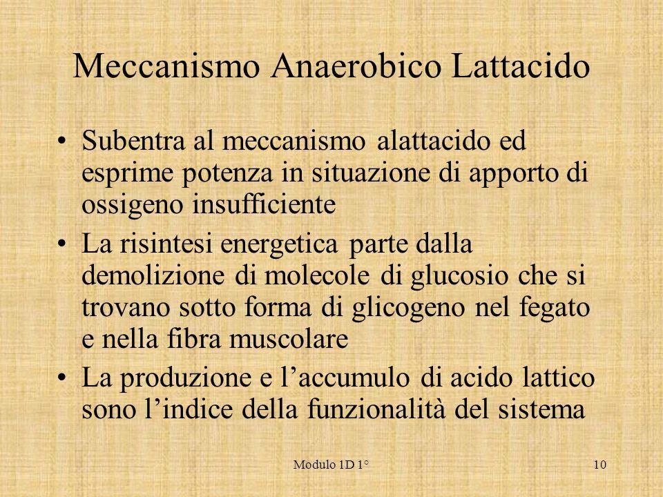 Meccanismo Anaerobico Lattacido