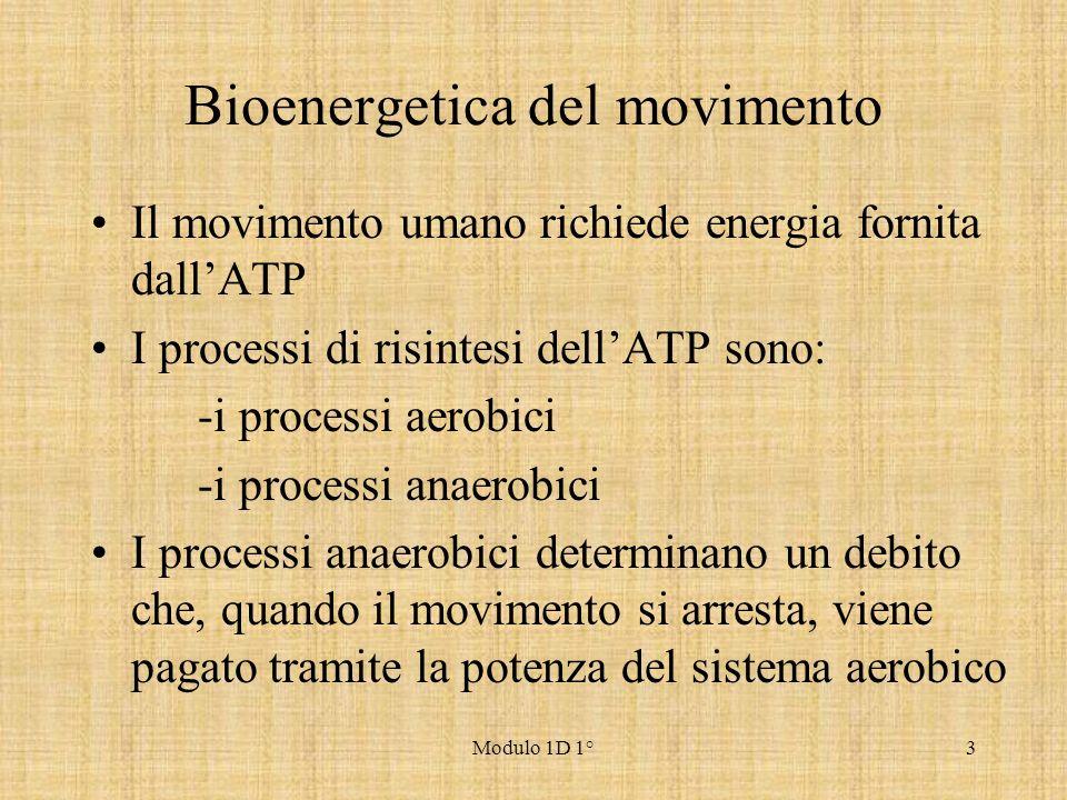 Bioenergetica del movimento