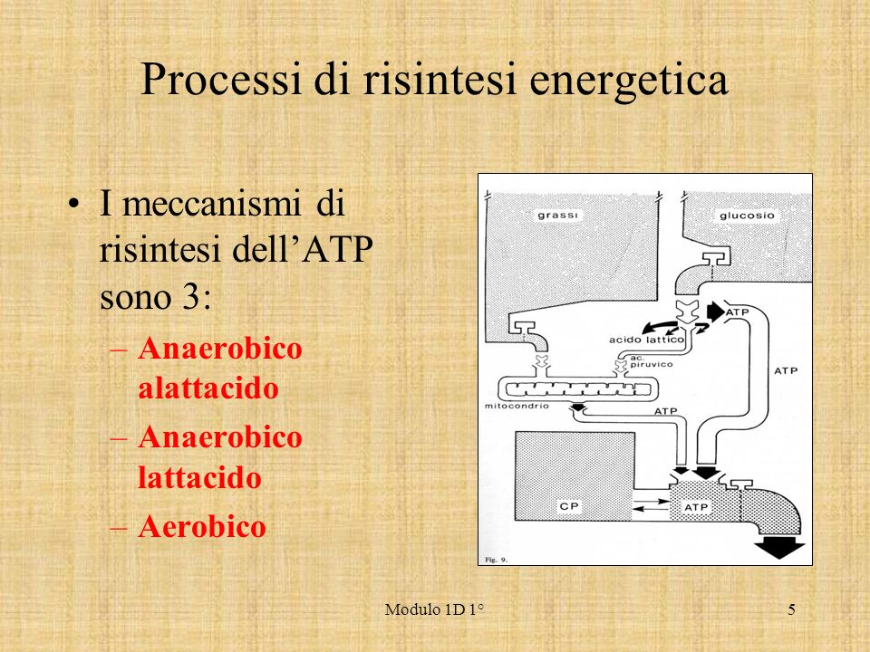 Processi di risintesi energetica