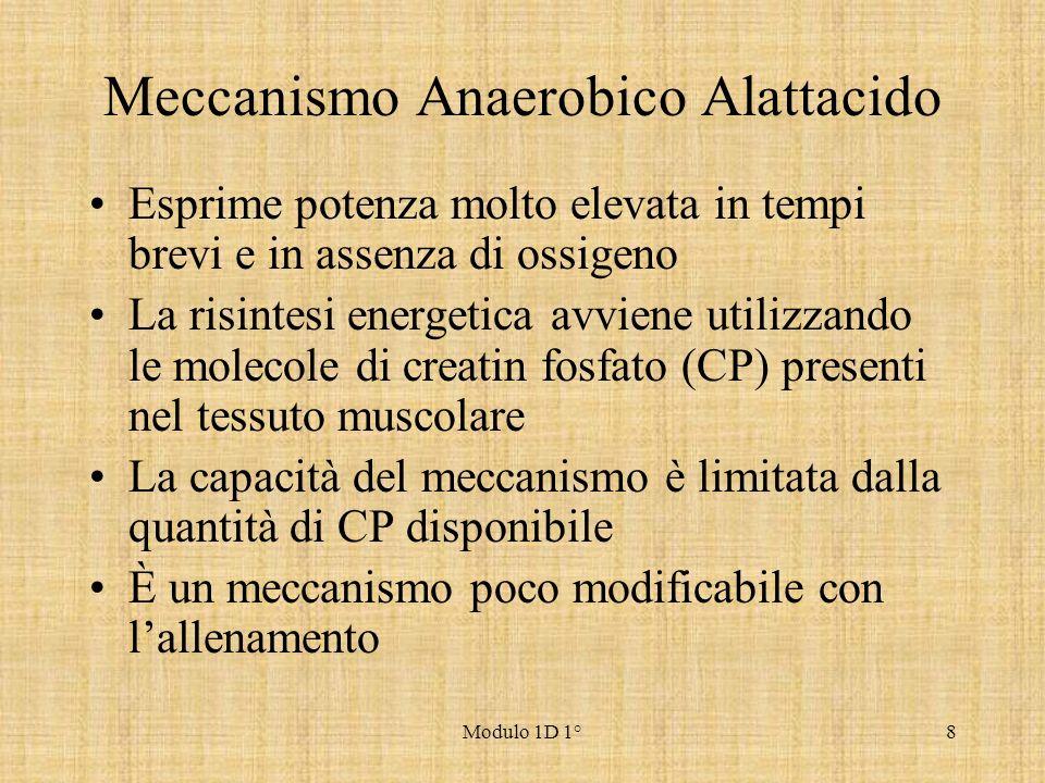 Meccanismo Anaerobico Alattacido