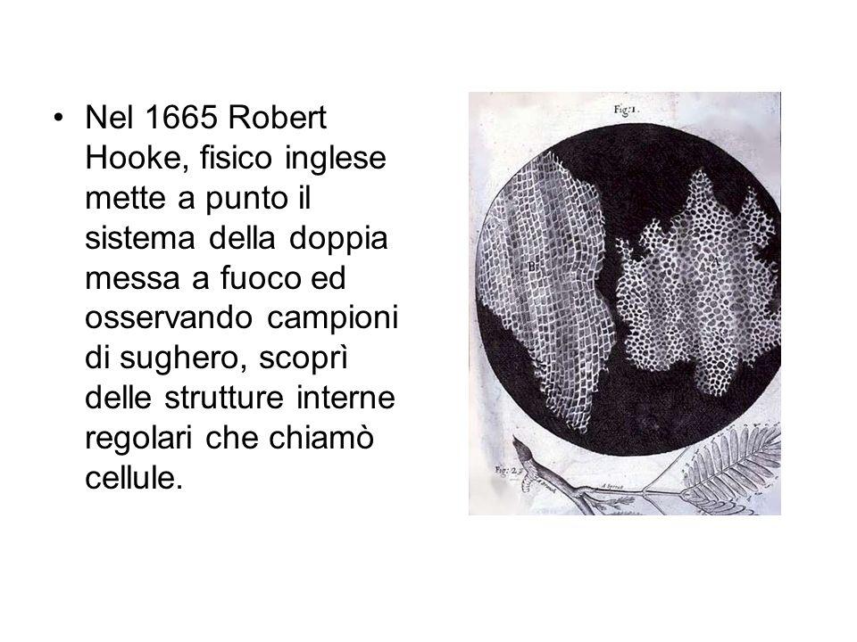 Nel 1665 Robert Hooke, fisico inglese mette a punto il sistema della doppia messa a fuoco ed osservando campioni di sughero, scoprì delle strutture interne regolari che chiamò cellule.