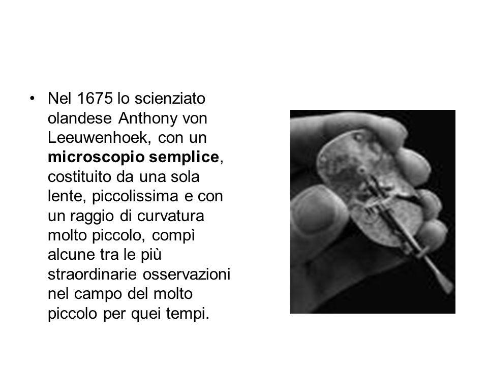 Nel 1675 lo scienziato olandese Anthony von Leeuwenhoek, con un microscopio semplice, costituito da una sola lente, piccolissima e con un raggio di curvatura molto piccolo, compì alcune tra le più straordinarie osservazioni nel campo del molto piccolo per quei tempi.