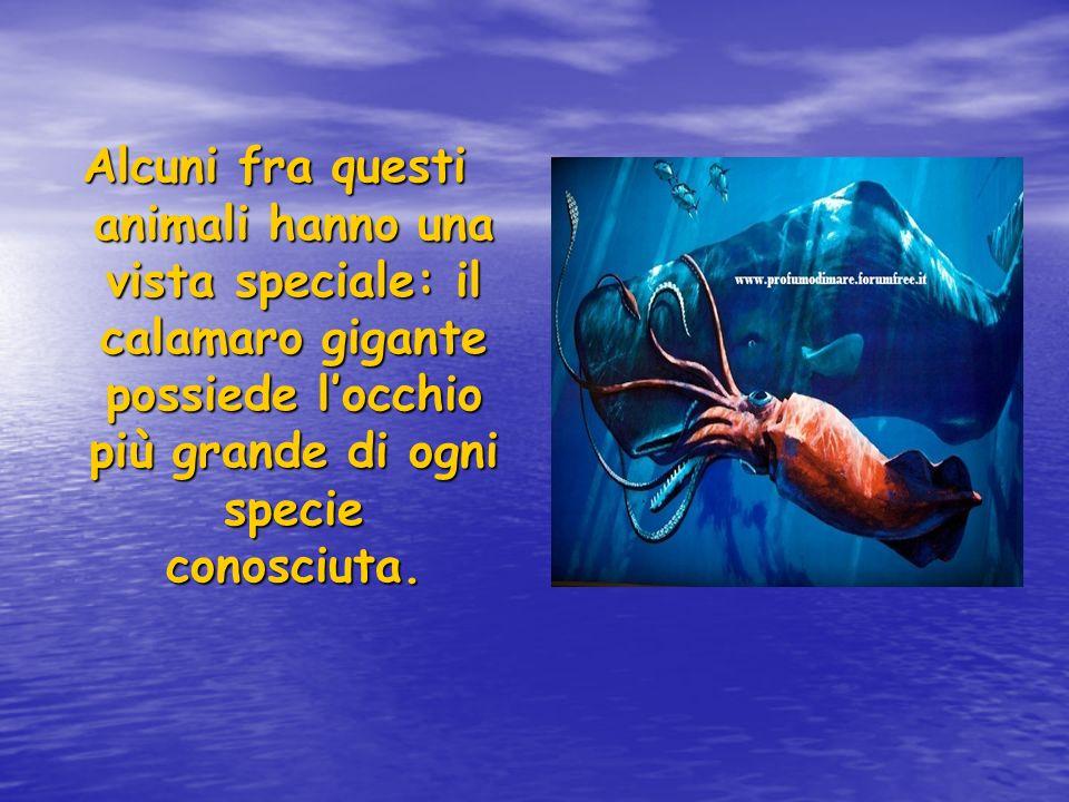 Alcuni fra questi animali hanno una vista speciale: il calamaro gigante possiede l'occhio più grande di ogni specie conosciuta.
