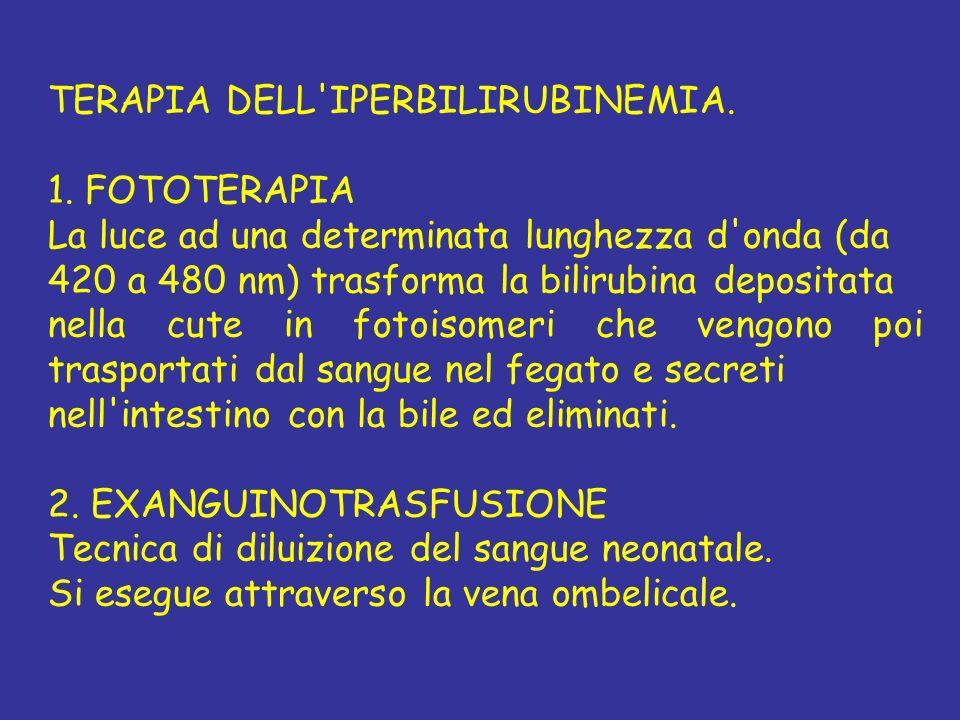 TERAPIA DELL IPERBILIRUBINEMIA.