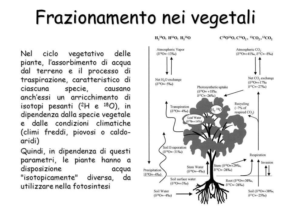Frazionamento nei vegetali