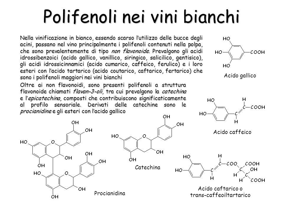 Polifenoli nei vini bianchi