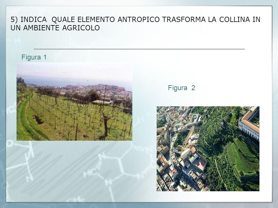 5) INDICA QUALE ELEMENTO ANTROPICO TRASFORMA LA COLLINA IN UN AMBIENTE AGRICOLO