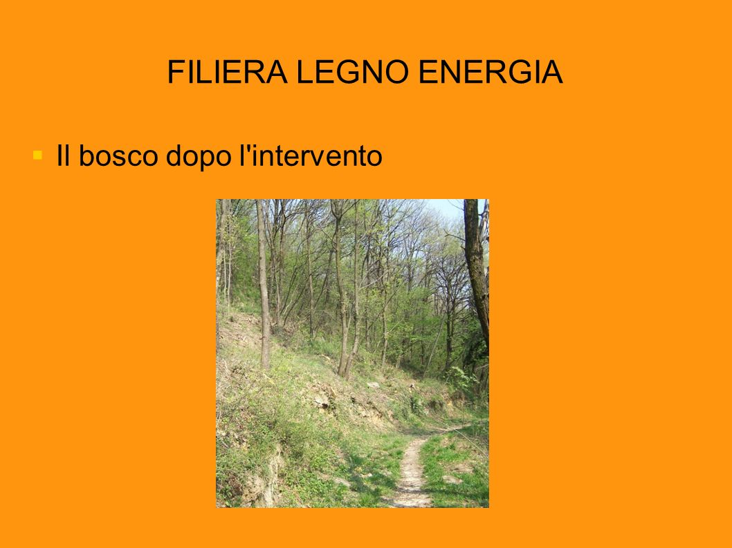 FILIERA LEGNO ENERGIA Il bosco dopo l intervento