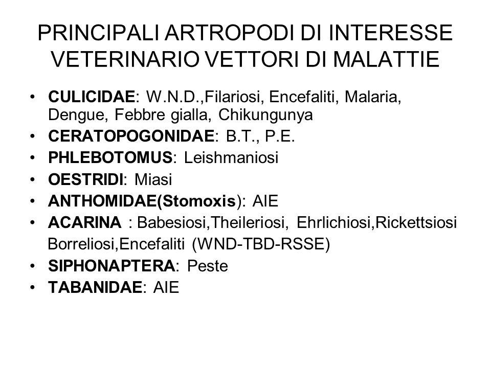 PRINCIPALI ARTROPODI DI INTERESSE VETERINARIO VETTORI DI MALATTIE