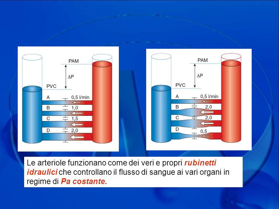 Le arteriole funzionano come dei veri e propri rubinetti idraulici che controllano il flusso di sangue ai vari organi in regime di Pa costante.