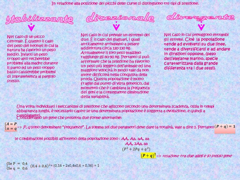 stabilizzante direzionale divergente =>