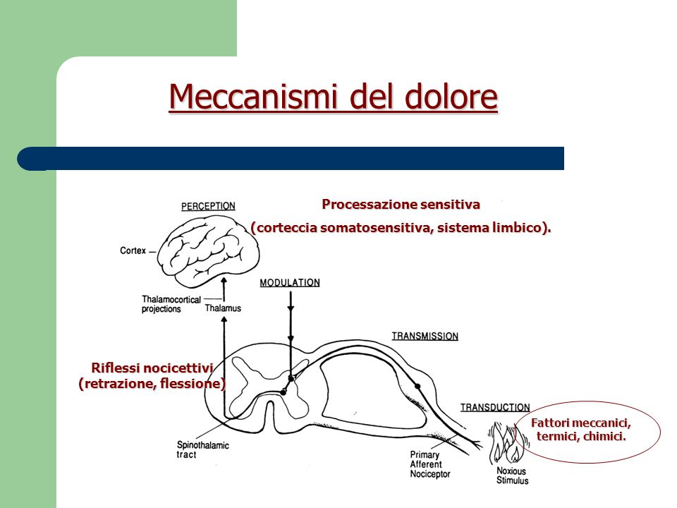 Meccanismi del dolore Processazione sensitiva