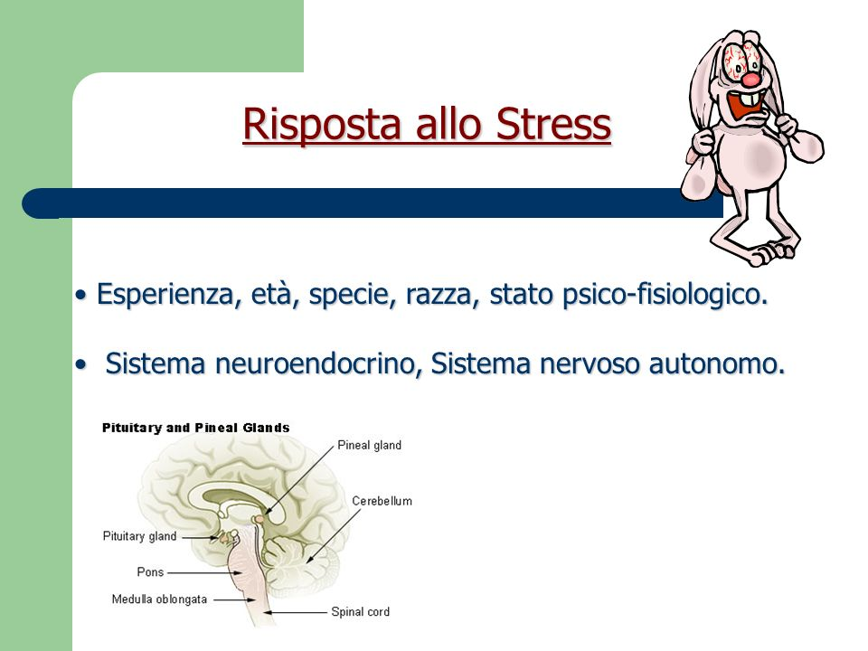 Risposta allo StressEsperienza, età, specie, razza, stato psico-fisiologico.