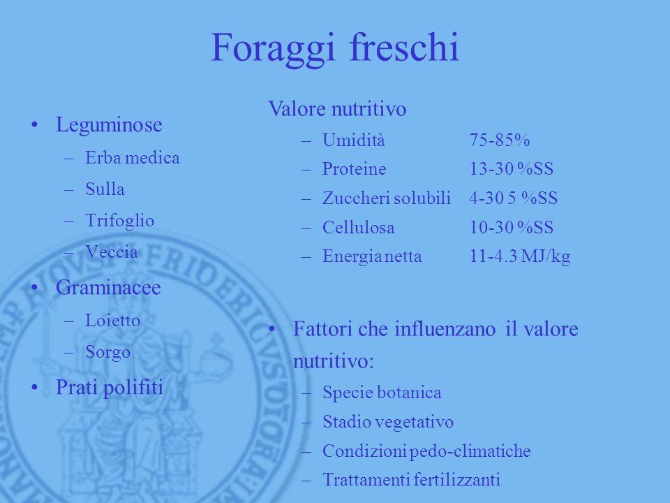 Foraggi freschi Valore nutritivo Leguminose Graminacee