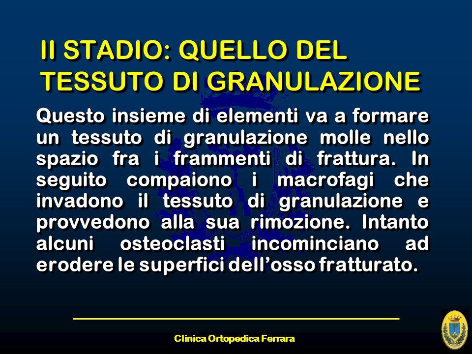 II STADIO: QUELLO DEL TESSUTO DI GRANULAZIONE