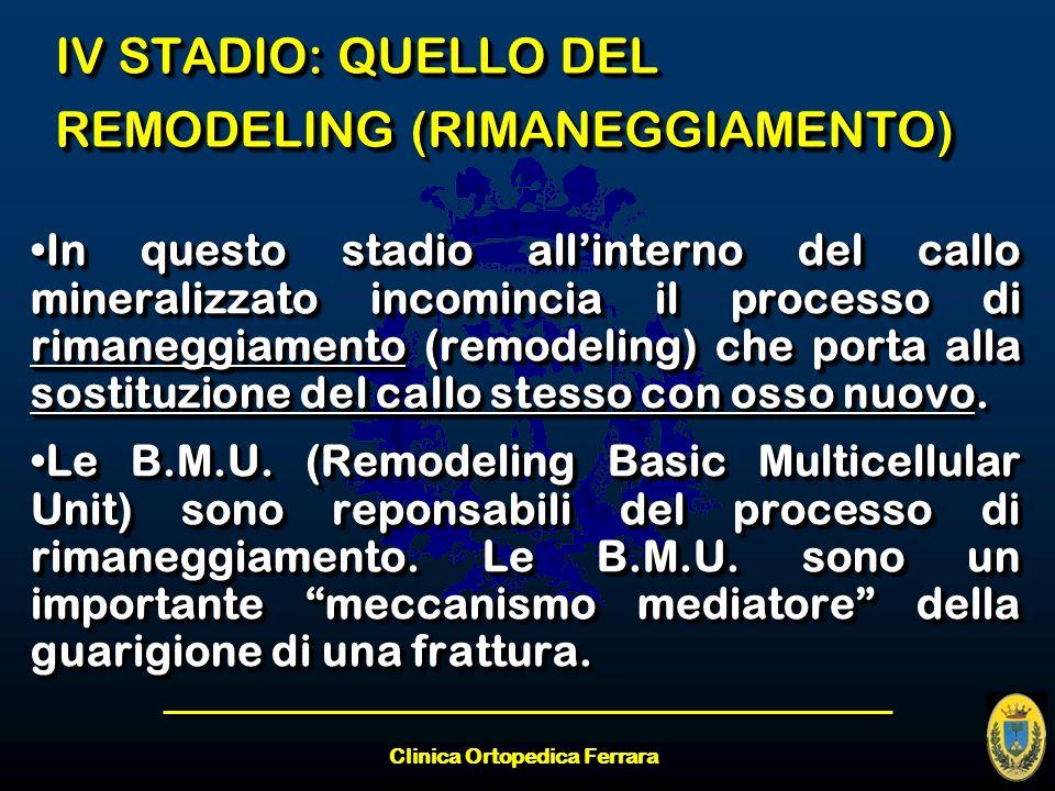 IV STADIO: QUELLO DEL REMODELING (RIMANEGGIAMENTO)