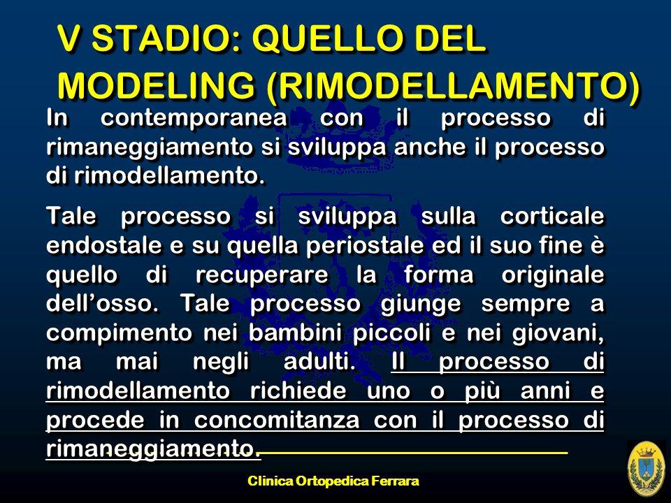 V STADIO: QUELLO DEL MODELING (RIMODELLAMENTO)
