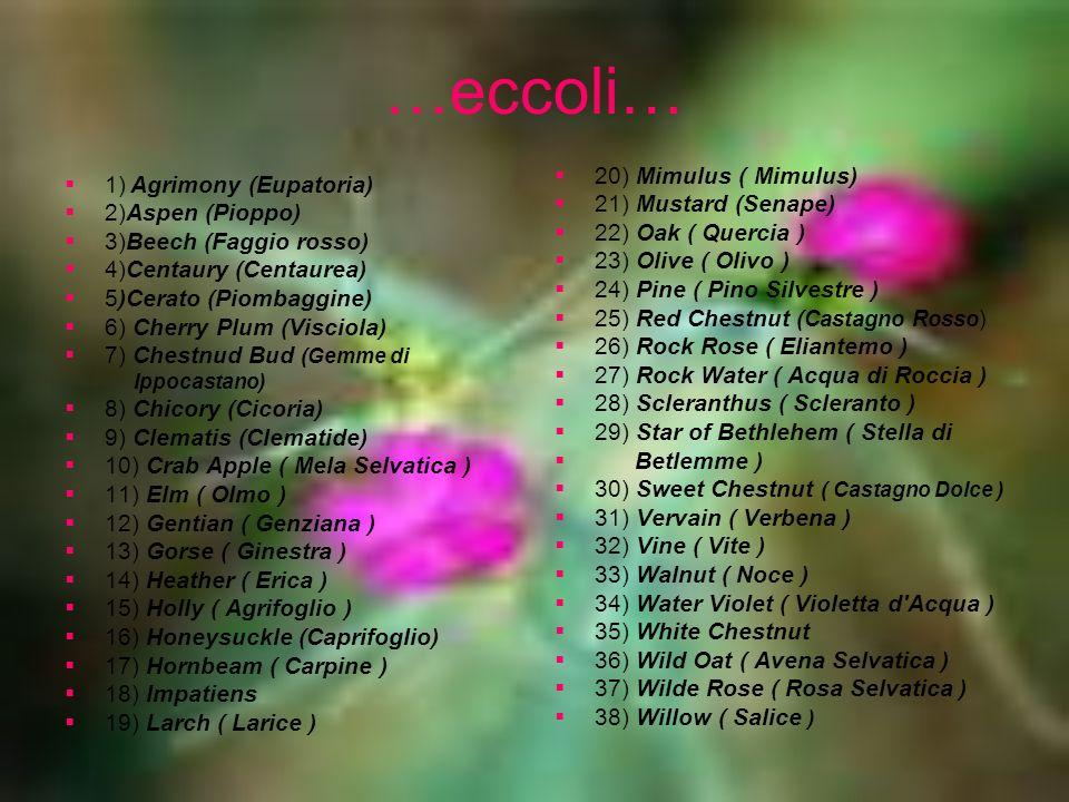 …eccoli… 20) Mimulus ( Mimulus) 1) Agrimony (Eupatoria)