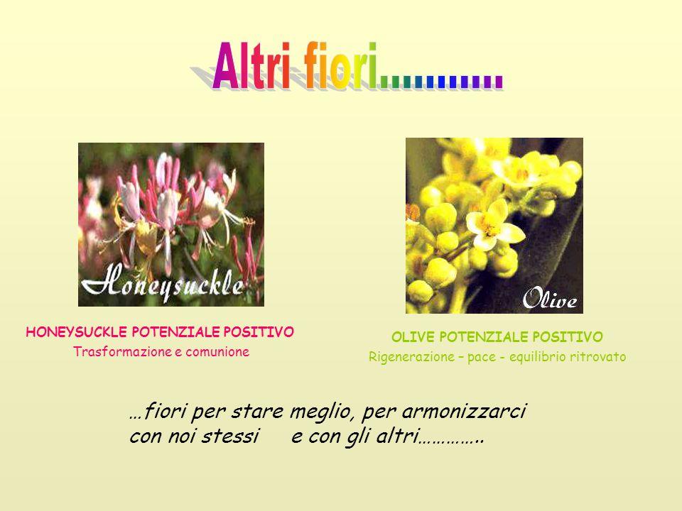 Altri fiori……….. HONEYSUCKLE POTENZIALE POSITIVO Trasformazione e comunione. OLIVE POTENZIALE POSITIVO Rigenerazione – pace - equilibrio ritrovato.