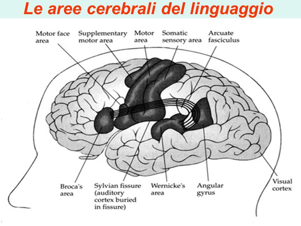 Le aree cerebrali del linguaggio