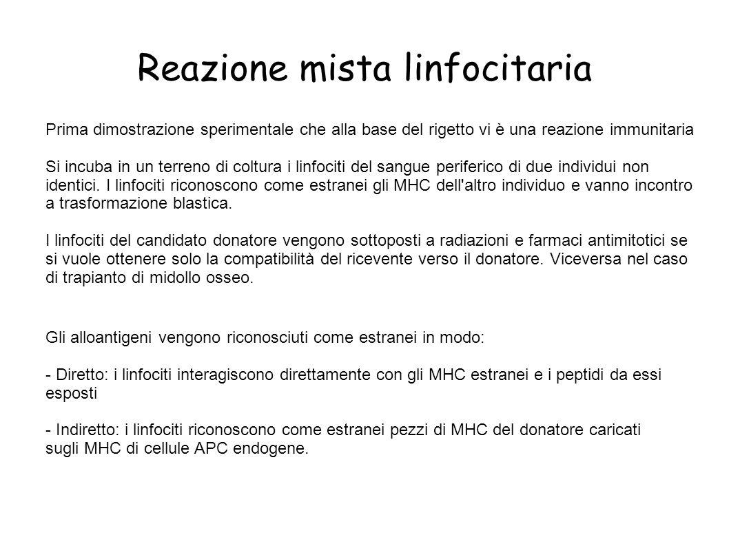 Reazione mista linfocitaria