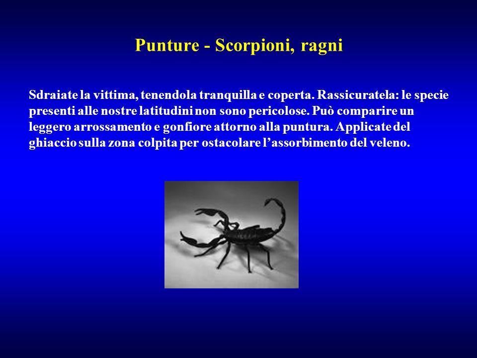 Punture - Scorpioni, ragni