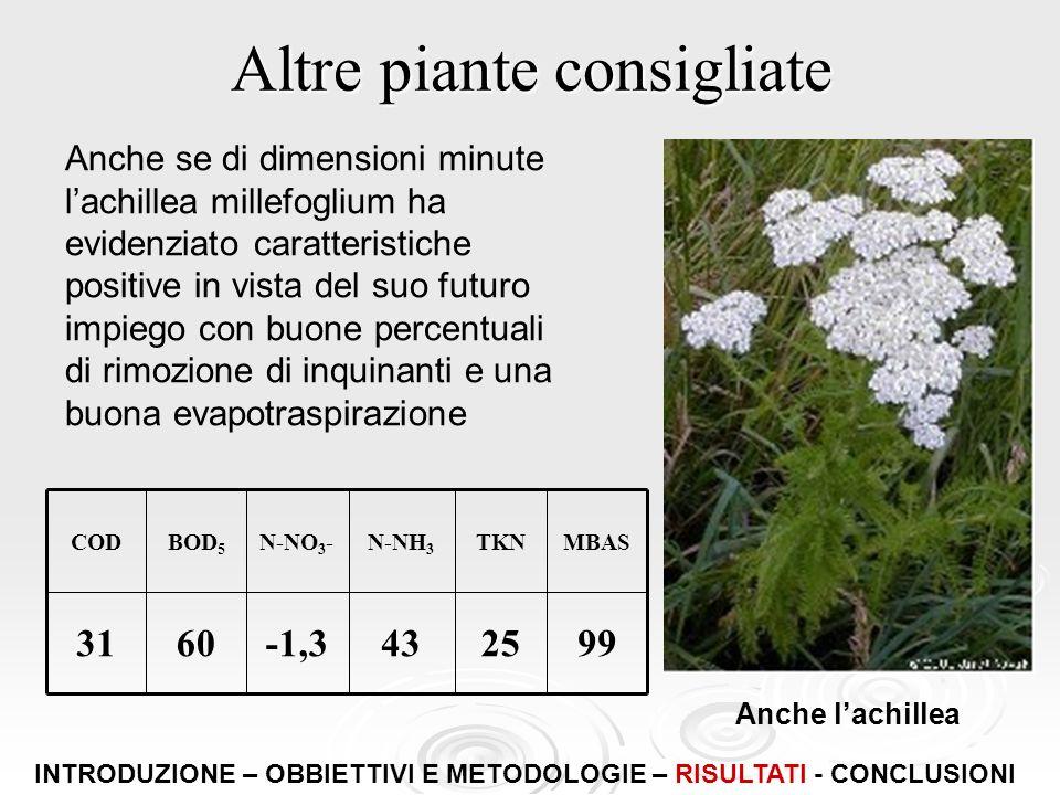 Altre piante consigliate